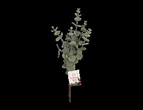Wholesale Eucalyptus Spray | Gem Imports Ltd